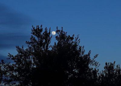 Olivar a la luz de la luna. Foto tomada por José Francisco Cantón Galán el día 9 de marzo de 2020